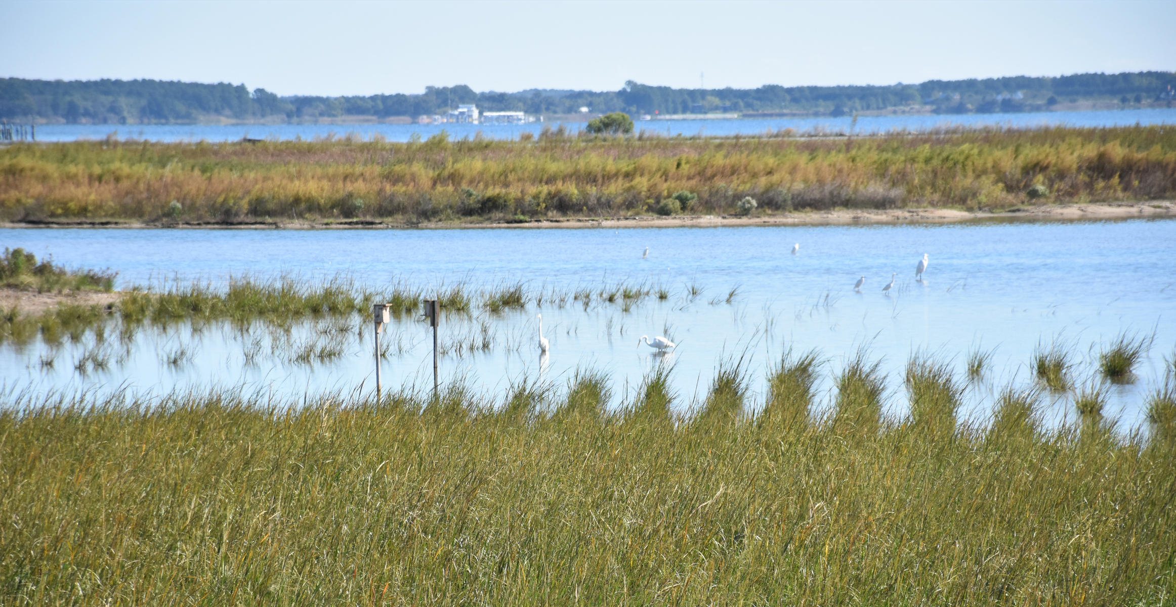 Many of the Chesapeake Bay's most sensitive bird species are already returning to nest.