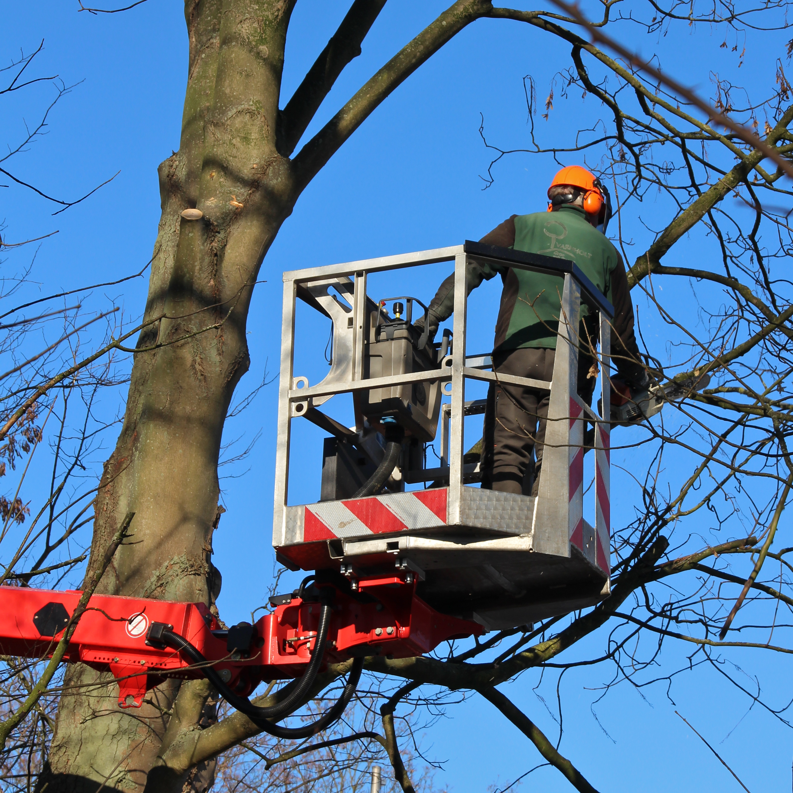 Pruning trees safely and easily from inside the work basket: the 185°swiveling jib - RÜSSEL ® - on the T 360 makes it all possible. The special tree-cutting basket – only 1.05 m wide – is available for all models in the T STEIGER ® series. It is especially advantageous when navigating amongst branches. Without constantly having to reposition the truck mount, Varnholt employees were able to maneuver around the tree and prune all of the necessary branches. The ultra-modern control panel in the work basket - Cockpit -, further enhances the level of safety and facilitates ergonomic, fatigue-free handling. Image source: Varnholt, Gütersloh